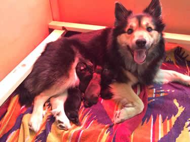 Tjara met pups